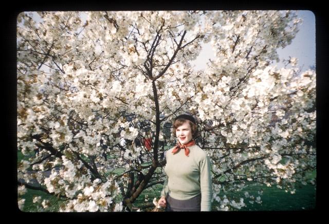 1957_cherry_blossom_kew_gardens_spring